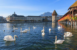 Lucerne, early morning Stock Photos