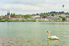 Lucerne lake view Switzerland Royalty Free Stock Photography