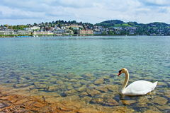 Lucerne lake view Switzerland Stock Photos