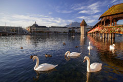 Lucerne, Switzerland, the Chapel Bridge. Lucerne, Switzerland, the Reuss River, the Chapel Bridge and the Water Tower with swimming swans at autumn sunrise Royalty Free Stock Photos