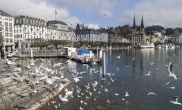 Lucerne Stock Image
