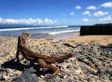 Lucertola alla spiaggia Immagini Stock Libere da Diritti