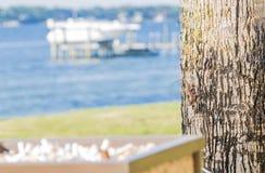 Lucertola cammuffata di Brown Anole sull'albero fotografia stock