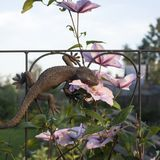 Lucertola del Faux che si siede sull'arco con i fiori Immagini Stock