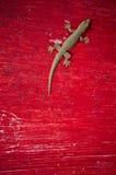 Lucertola del Gecko Fotografia Stock
