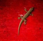Lucertola del Gecko fotografie stock