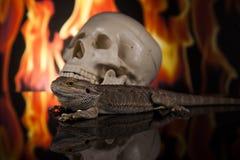 Lucertola di drago accanto ad un cranio umano Immagine Stock
