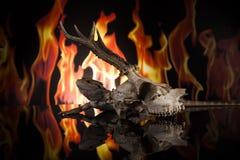 Lucertola di drago e cranio dei cervi Fotografie Stock Libere da Diritti