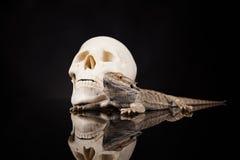 Lucertola di drago e cranio dell'essere umano Fotografia Stock Libera da Diritti