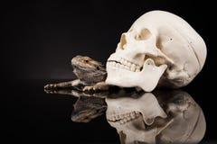 Lucertola di drago e cranio dell'essere umano Immagine Stock Libera da Diritti