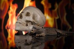 Lucertola di drago e cranio dell'essere umano Fotografia Stock