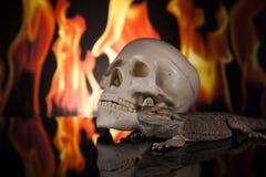 Lucertola di drago e cranio dell'essere umano Immagini Stock