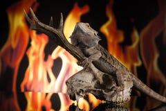 Lucertola di drago su un cranio dei cervi Fotografia Stock