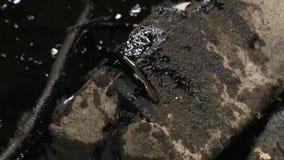 Lucertola impotente coperta di prodotti chimici dell'olio dopo la catastrofe ecologica archivi video