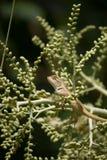 Lucertola in natura verde Fotografia Stock