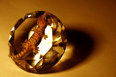 Lucertola sul diamante Fotografie Stock Libere da Diritti