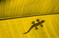 Lucertola sulla foglia gialla della banana Fotografia Stock Libera da Diritti