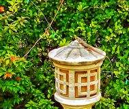 Lucertola sulla lampada Fotografia Stock