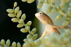 Lucertola sulla palma del betel in giardino fotografie stock