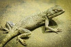 Lucertola sulla sabbia Fotografia Stock