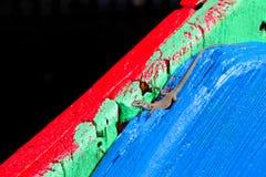 Lucertola sulla tavola di legno colorata Fotografia Stock Libera da Diritti