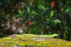 Lucertola verde sulla carta da parati verde del fondo della terra fotografia stock
