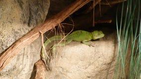 Lucertola verde sulle vecchie pietre in cespugli verdi illustrazione di stock