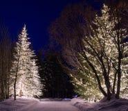 Luces al aire libre 2 del invierno Imágenes de archivo libres de regalías