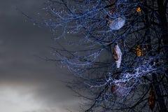 Luces de calles de la Navidad Imagen de archivo libre de regalías