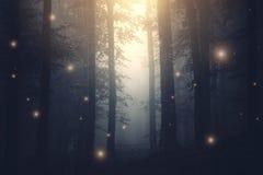 Luces de hadas de la fantasía mágica en bosque encantado con niebla fotografía de archivo libre de regalías