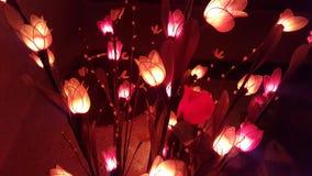 Luces de la flor de la Navidad imagen de archivo libre de regalías