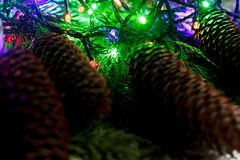 Luces de la guirnalda de la Navidad y conos del pino en ramas del abeto stylish Fotografía de archivo libre de regalías