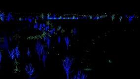 Luces de la Navidad azules y verdes en pequeños árboles almacen de video