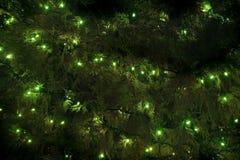 Luces de la Navidad colgadas en árbol de pino Imagen de archivo libre de regalías