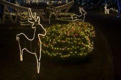 Luces de la Navidad en el jardín Fotos de archivo