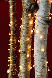 Luces de la Navidad en ramificaciones del abedul Imagen de archivo