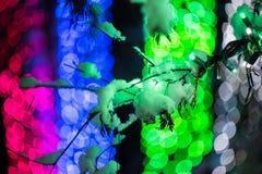 Luces de la nieve y del hielo Imagen de archivo libre de regalías
