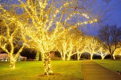Luces de la noche de árboles Foto de archivo libre de regalías