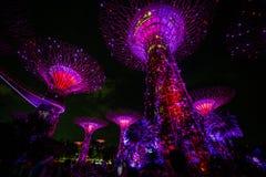 Luces de la noche del Supertrees imagenes de archivo