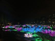 Luces de Lotus fotografía de archivo libre de regalías