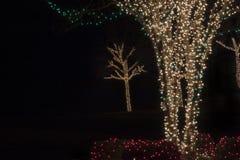 Luces del árbol Imagen de archivo libre de regalías