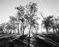 Luces del bosque de la mañana Imagen de archivo libre de regalías