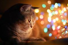 Luces del gato y de la Navidad Imagenes de archivo