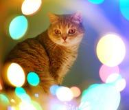 Luces del gato y de la Navidad Imagen de archivo