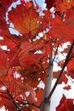 Luces del otoño fotografía de archivo libre de regalías