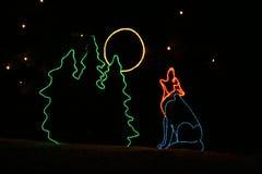 Luces del parque zoológico de Denver - coyote Imagen de archivo libre de regalías