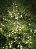 Luces en árbol fotografía de archivo libre de regalías