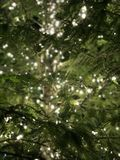Luces en el árbol fotos de archivo libres de regalías