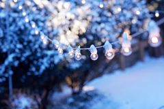 Luces festivas en un invernadero Fotos de archivo
