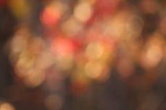Luces hermosas en bosque del otoño con efecto de la falta de definición Foto de archivo libre de regalías